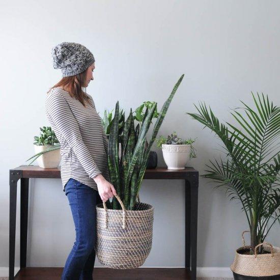 Houseplants for Beginners